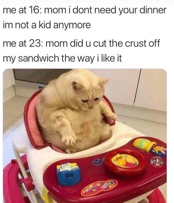 Cat - me at 16: mom i dont need your dinner im not a kid anymore me at 23: mom did u cut the crust off my sandwich the way i like it