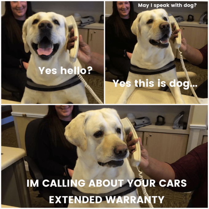 wholesome meme of a dog calling about an extended warranty for a car