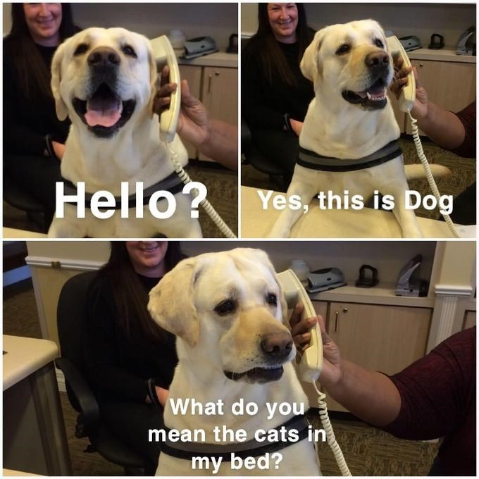 wholesome meme of a dog asking why there is a cat in his bed