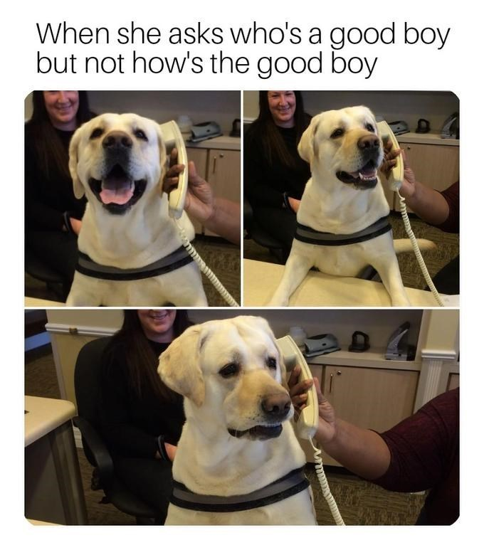wholesome meme about a dog getting called who's a good boy and not how's a good boy