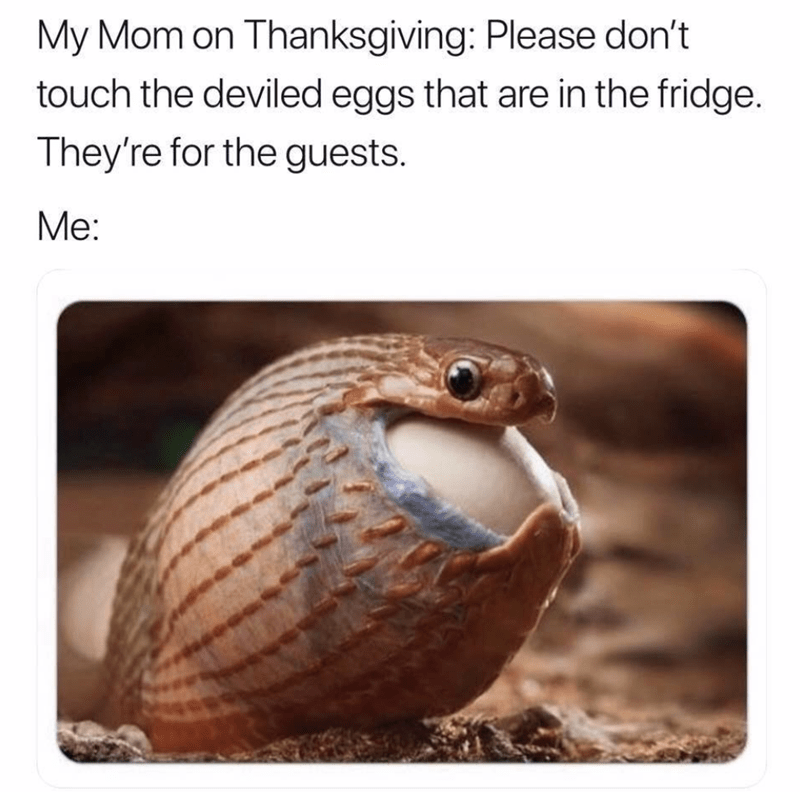 Adaptation - My Mom on Thanksgiving: Please don't touch the deviled eggs that are in the fridge. They're for the guests. Ме: