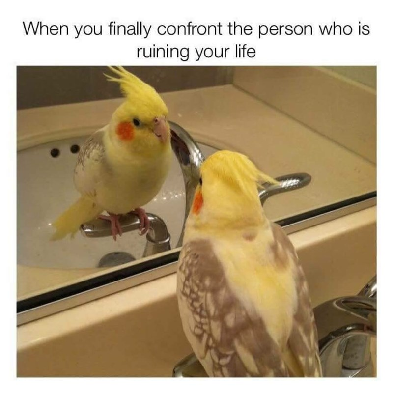 Bird - When you finally confront the person who is ruining your life