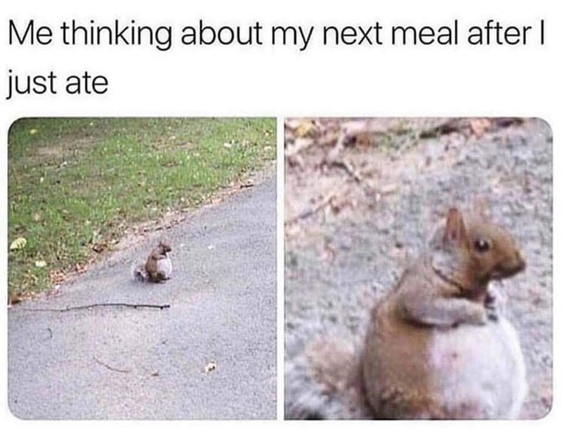 Squirrel - Me thinking about my next meal afterl just ate