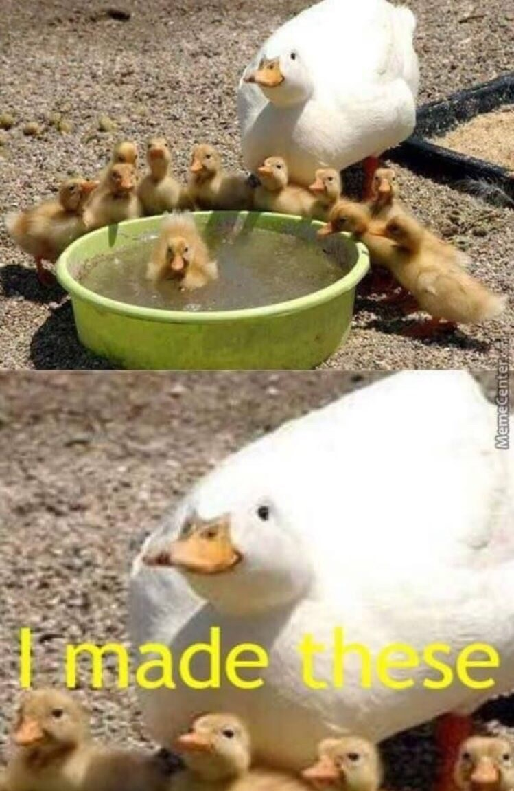 "Pic of a duck with a bunch of cute ducklings and text that reads, ""I made these"""
