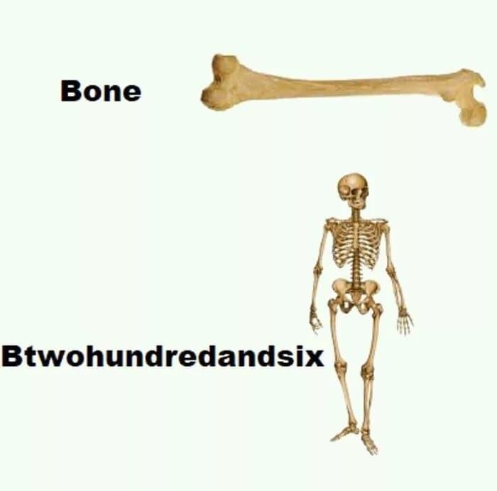Shoulder - Bone Btwohundredandsix