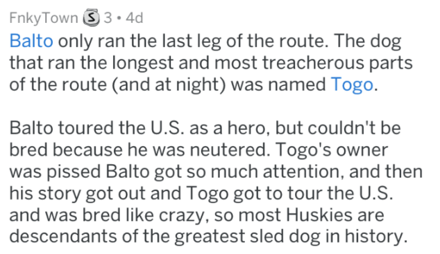 Text - Fnky Town S 3.4d Balto only ran the last leg of the route. The dog that ran the longest and most treacherous parts of the route (and at night) was named Togo. Balto toured the U.S. as a hero, but couldn't be bred because he was neutered. Togo's owner was pissed Balto got so much attention, and then his story got out and Togo got to tour the U.S. and was bred like crazy, so most Huskies are descendants of the greatest sled dog in history