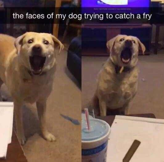 "Pics of a dog trying to catch a fry in his mouth with Snapchat caption that reads, ""The faces of my dog trying to catch a fry"""