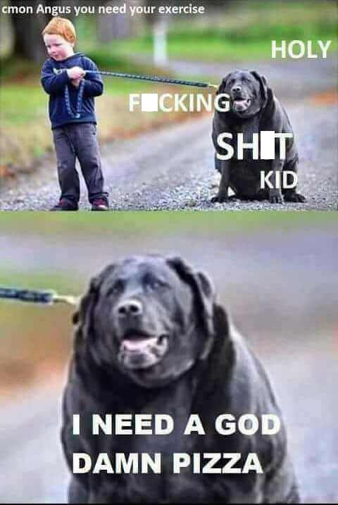 Pics of a very fat dog not wanting to go for his walk with a small child