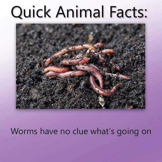 Organism - Quick Animal Facts: Worms have no clue what's going on