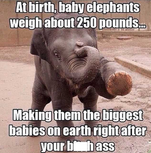 Elephant - Atbirth, baby elephants weigh about 250 pounds Making them the biggest babies on earth right after your b hass