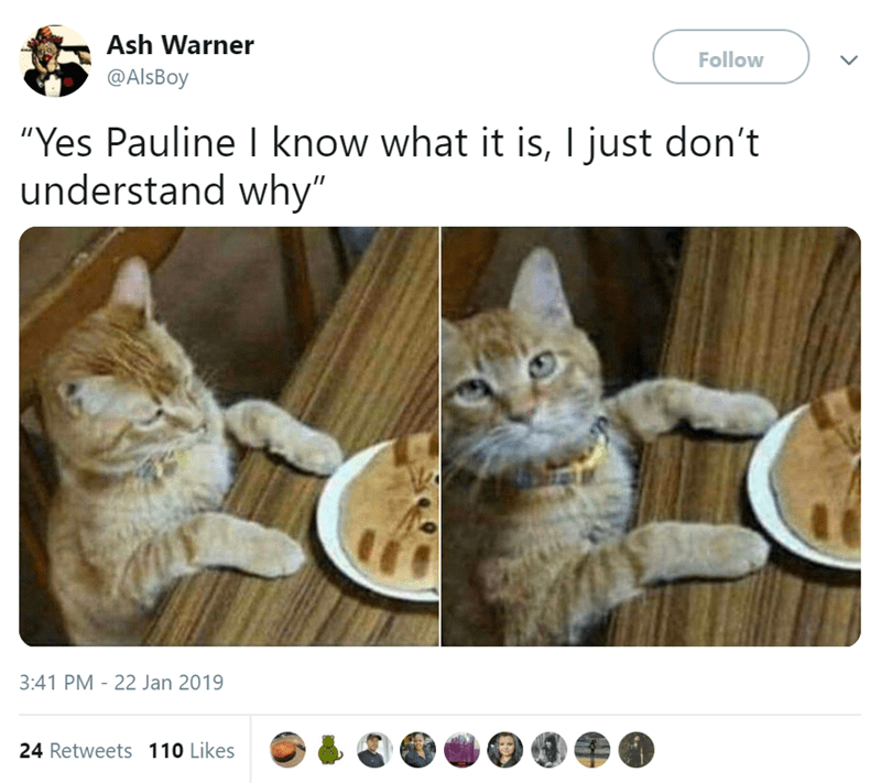 "Cat - Ash Warner Follow @AlsBoy ""Yes Pauline I know what it is, I just don't understand why"" 3:41 PM 22 Jan 2019 24 Retweets 110 Likes"