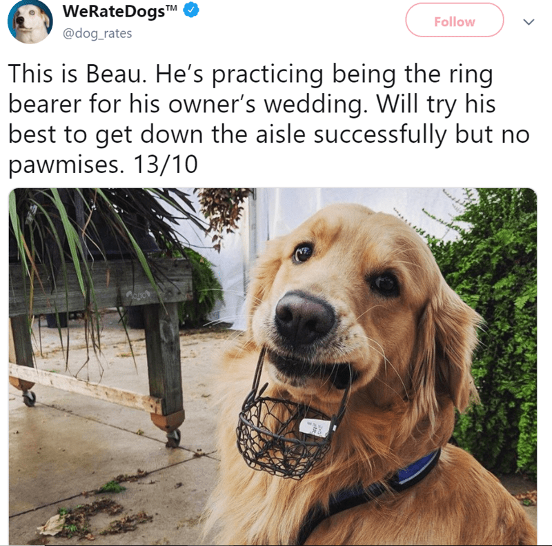 Dog - WeRate DogsTM Follow @dog_rates This is Beau. He's practicing being the ring bearer for his owner's wedding. Will try his best to get down the aisle successfully but no pawmises. 13/10 oo