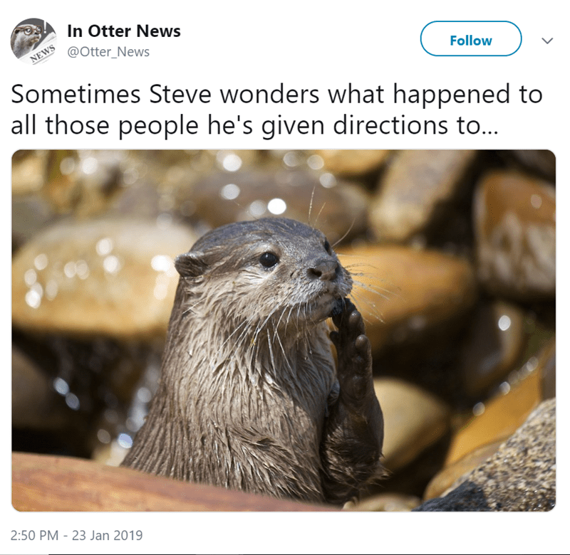 Otter - In Otter News @Otter_News NEWS Follow Sometimes Steve wonders what happened to all those people he's given directions to... 2:50 PM 23 Jan 2019