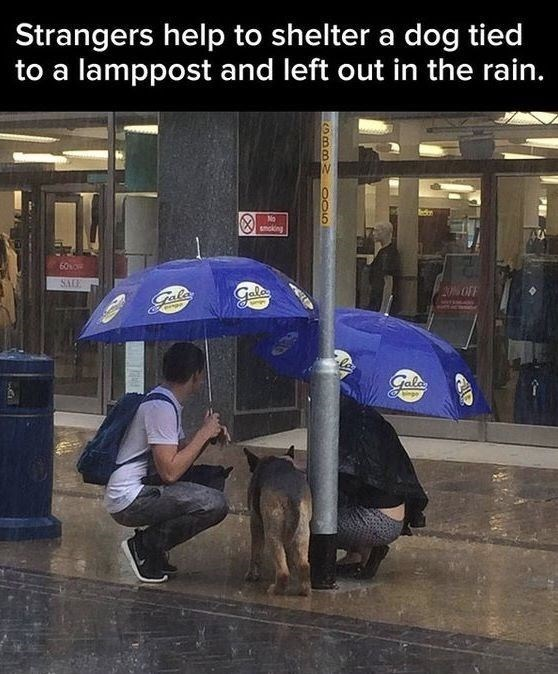 wholesome meme - Umbrella - Strangers help to shelter a dog tied to a lamppost and left out in the rain. edr No smckkng 60so SAE OFF Gala Gala