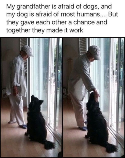 wholesome meme - Canidae - My grandfather is afraid of dogs, and my dog is afraid of most humans.... But they gave each other a chance and together they made it work