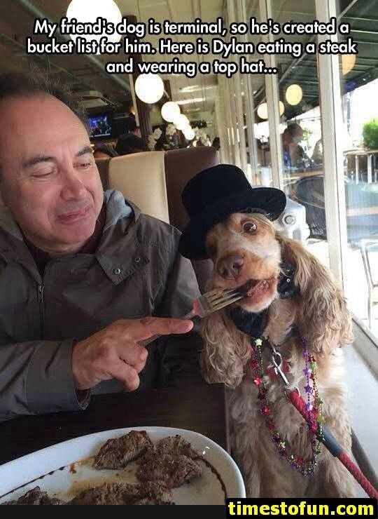 wholesome meme - Canidae - My friend's dog is terminal, so he's creafed a bucket list for him, Here is Dylan eating a steak and wearing a top hat.. timestofun.com