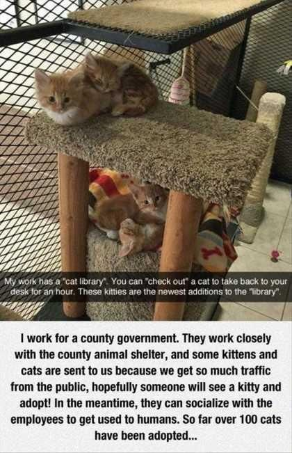 """wholesome meme - Cat - My work has a """"cat library You can """"check out a cat to take back to your desk tor an hour. These kitties are the newest additions to the """"library"""" I work for a county government"""