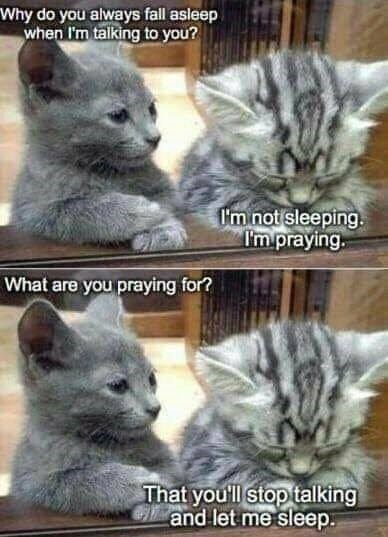 sleeping cat is praying his kitten friend stops talking so he can sleep