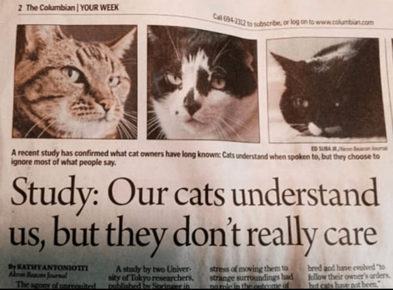 Funny newspaper headline.