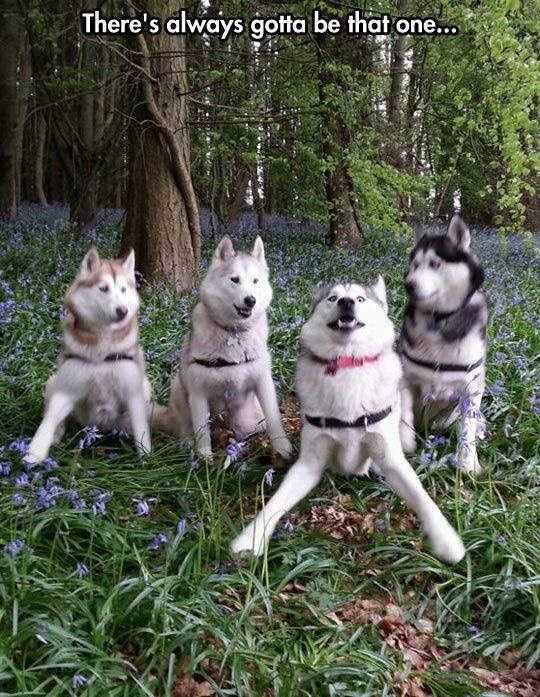 wholesome meme of a group of dogs and one dog ruins the picture