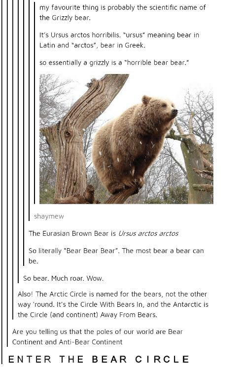 wholesome meme about the scientific name of a grizzly bear