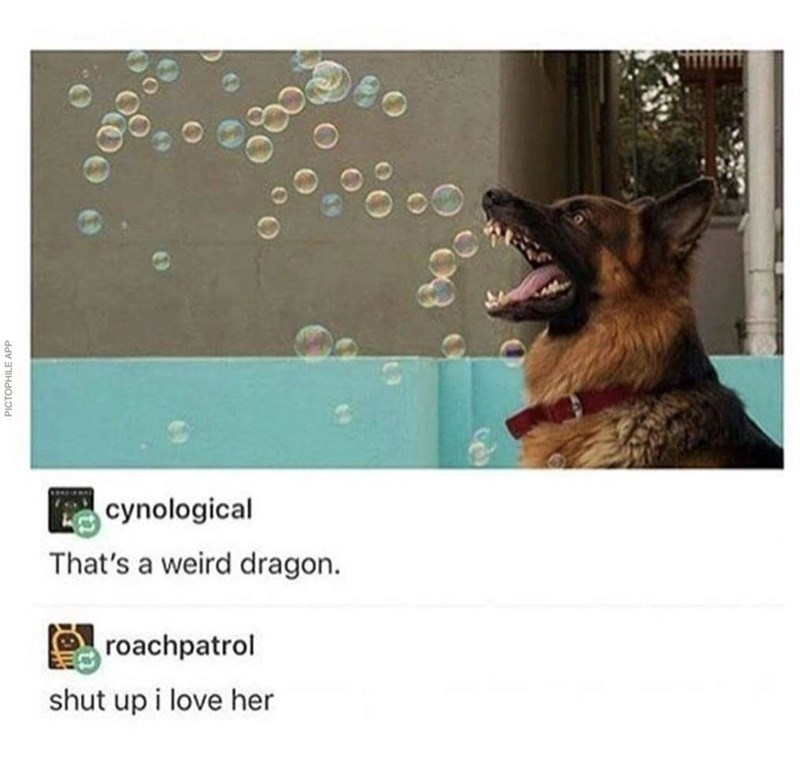 wholesome meme of a dog near bubbles