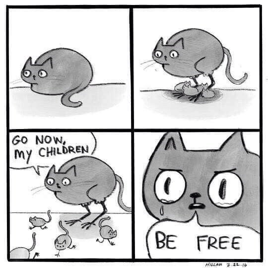 wholesome meme of a cat who lets her kitten go free