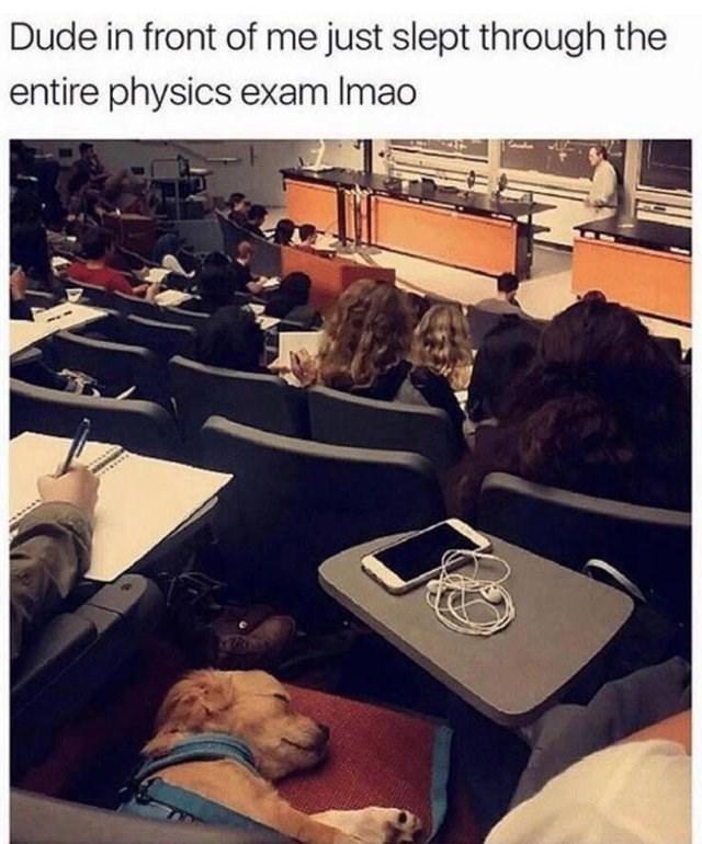 wholesome meme of a dog sleeping inside a classroom