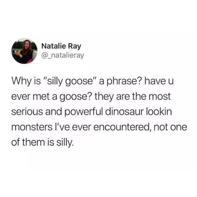"""meme - Text - Natalie Ray @natalieray Why is """"silly goose"""" a phrase? have u ever met a goose? they are the most serious and powerful dinosaur lookin monsters I've ever encountered, not one of them is silly."""