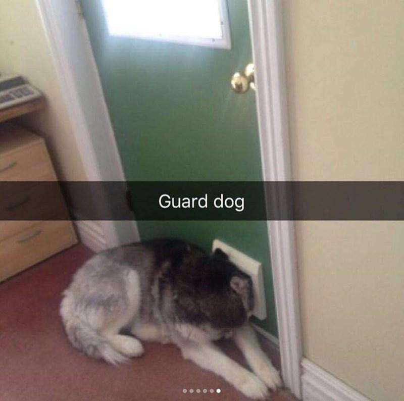 Cat - Guard dog