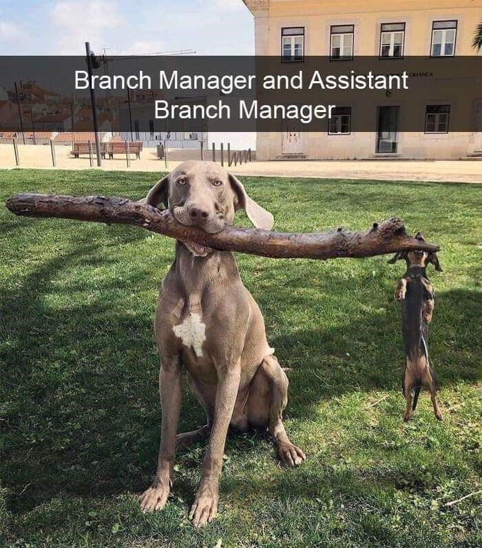 Dog - CUANCA Branch Manager and Assistant Branch Manager