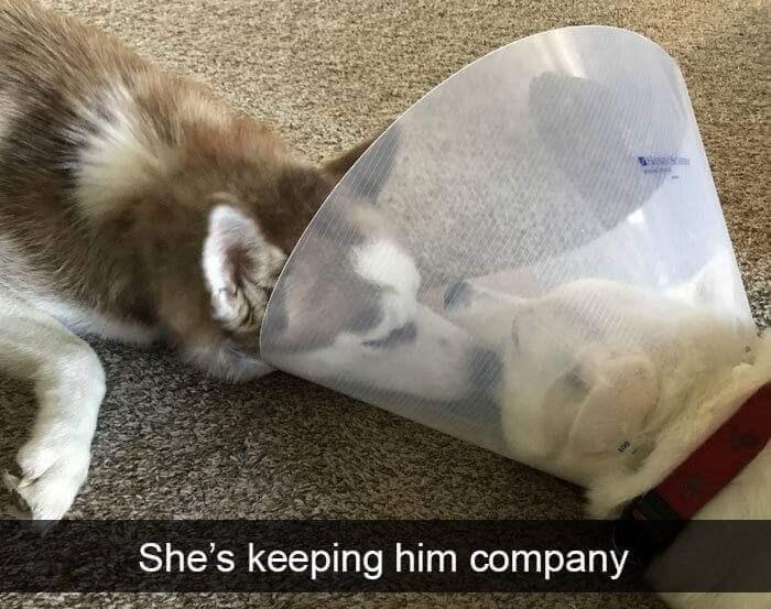 Cat - She's keeping him company ne