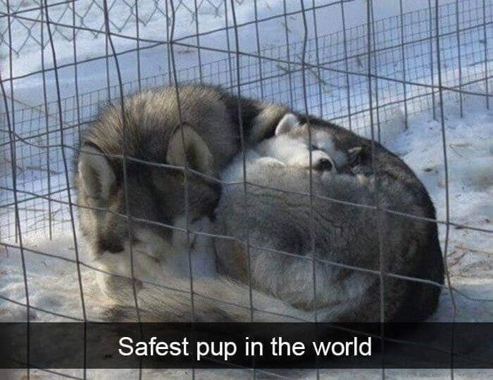 Mammal - Safest pup in the world