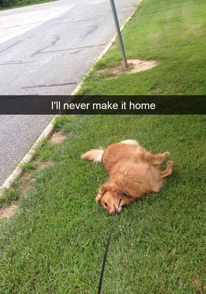 Grass - I'll never make it home