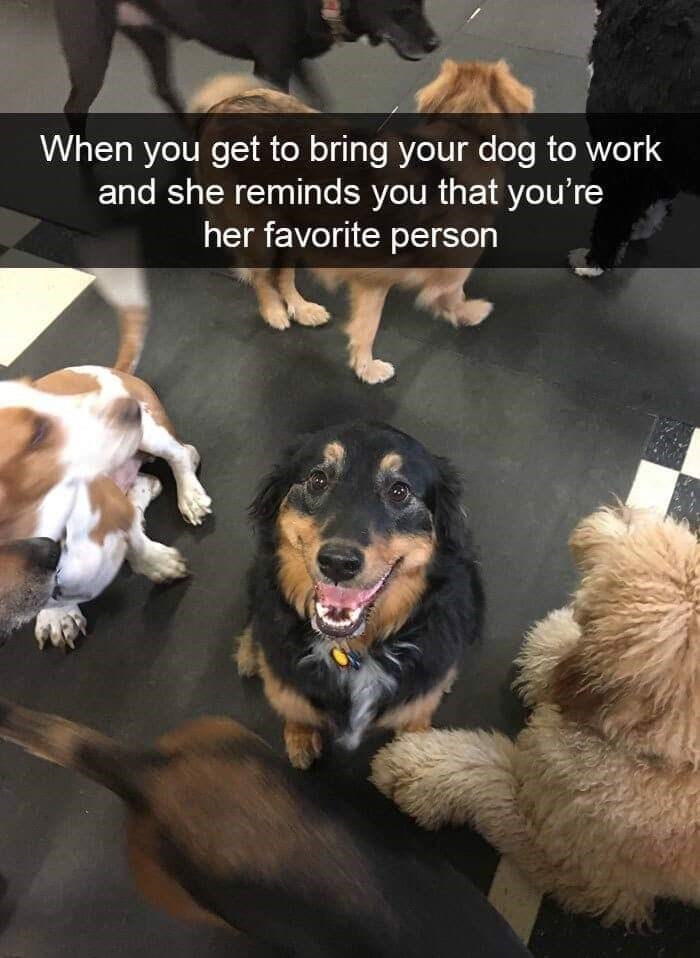 Dog - When you get to bring your dog to work and she reminds you that you're her favorite person