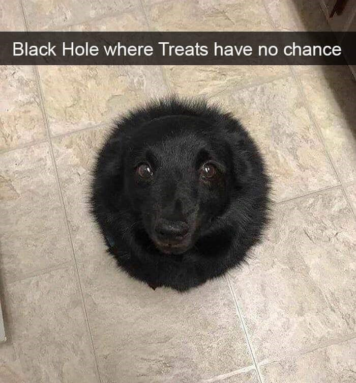 Dog - Black Hole where Treats have no chance