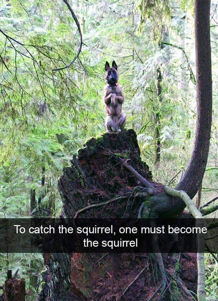Nature reserve - To catch the squirrel, one must become the squirrel