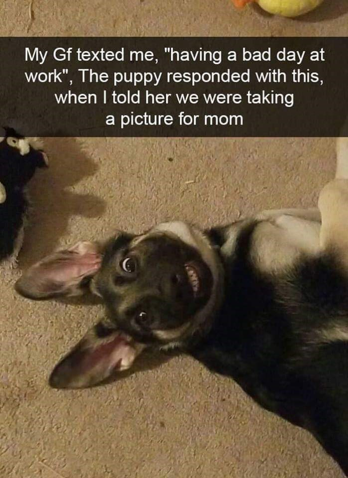 """Canidae - My Gf texted me, """"having a bad day at work"""", The puppy responded with this, when I told her we were taking a picture for mom"""