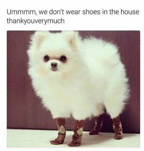 Mammal - Ummmm, we don't wear shoes in the house thankyouverymuch