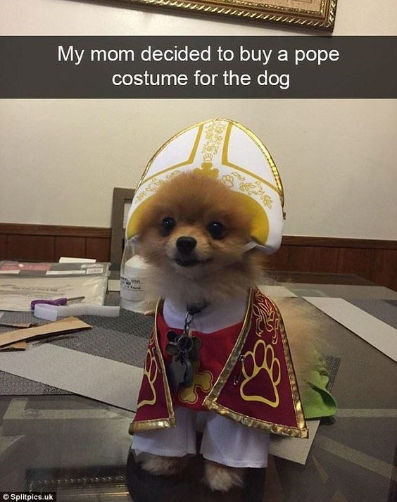 Dog clothes - My mom decided to buy a pope costume for the dog OSplitpics.uk