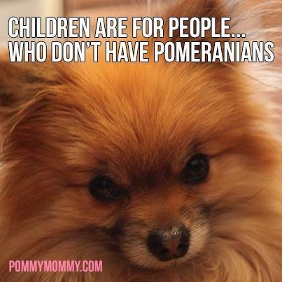 Dog - CHILDREN ARE FOR PEOPLE WHO DON'T HAVE POMERANIANS POMMYMOMMY.COM