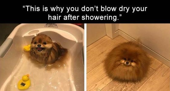 "Dog - ""This is why you don't blow dry your hair after showering."""