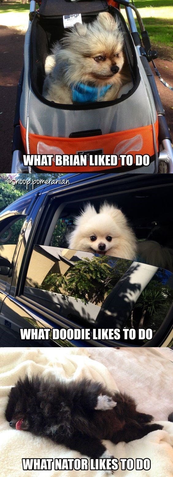 Dog - EBegr WHAT BRIAN LIKED TO DO ooppomeranian WHAT DOODIE LIKES TO DO WHAT NATOR LIKES TO DO