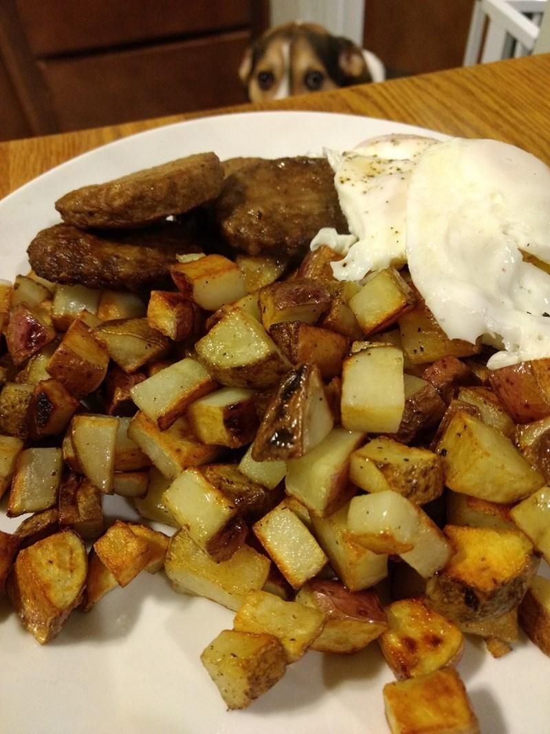 Cheezburger Image 9264741632