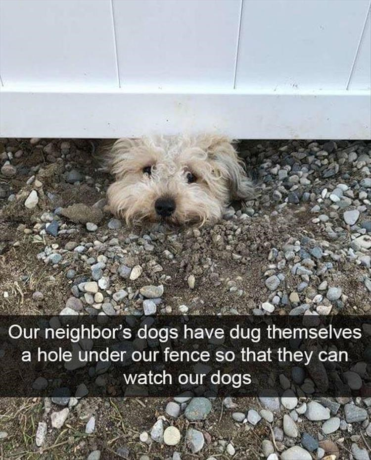 Dog - Our neighbor's dogs have dug themselves a hole under our fence so that they can watch our dogs