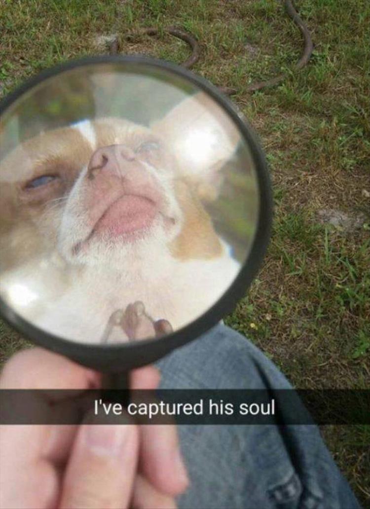 Nose - I've captured his soul