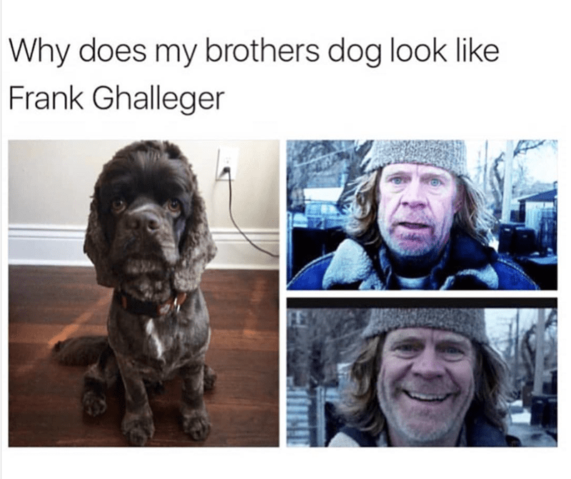 Dog - Why does my brothers dog look like Frank Ghalleger