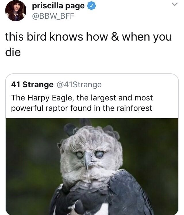Text - priscilla page @BBW_BFF this bird knows how & when you die 41 Strange @41 Strange The Harpy Eagle, the largest and most powerful raptor found in the rainforest