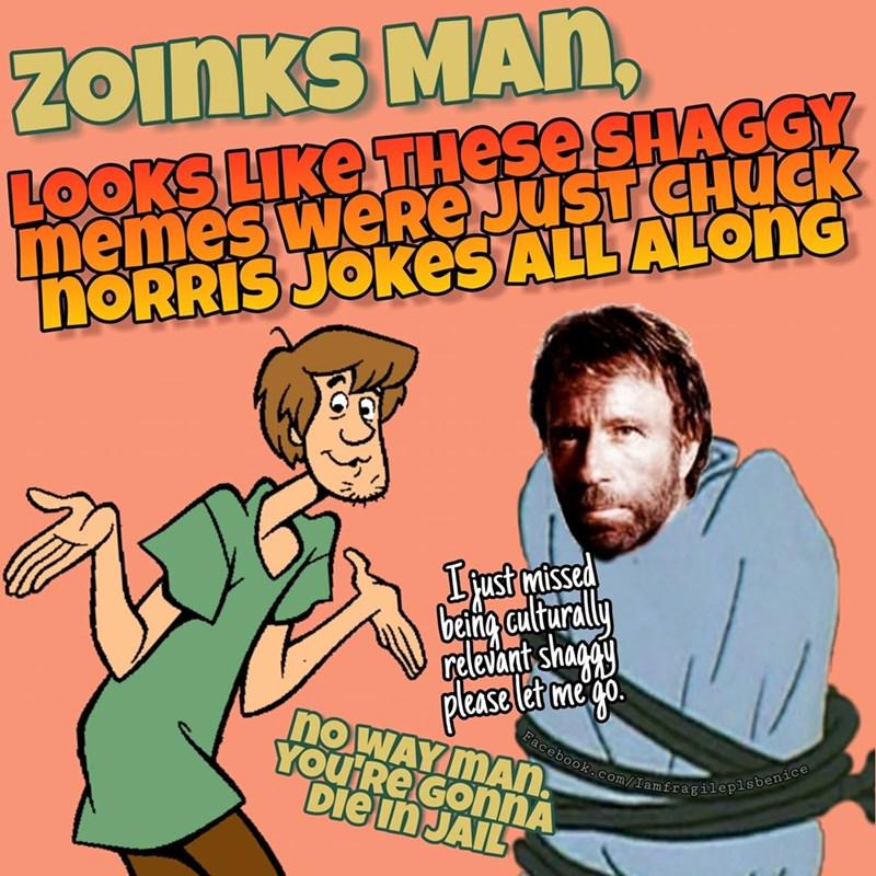 Cartoon - ZOINKS MAn, LOOKS LIKE THESE SHAGGY memes werReJusT CHUCK noRRIS JOKes ALLALONG Ifustmaissed Cgalturally relavant shapy pleaseler me noWAYMAn YOU Re GonNA Diein JAIL Facebook.com/Iamfragileplsbenice