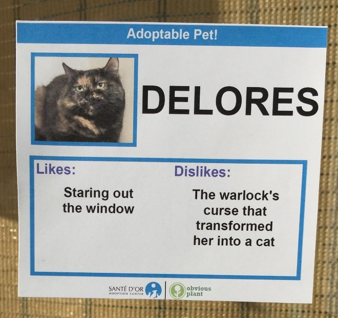 Cat - Adoptable Pet! DELORES Likes: Dislikes: Staring out the window The warlock's curse that transformed her into a cat SANTÉ D'OR obvious plant ADOPTION CENTER